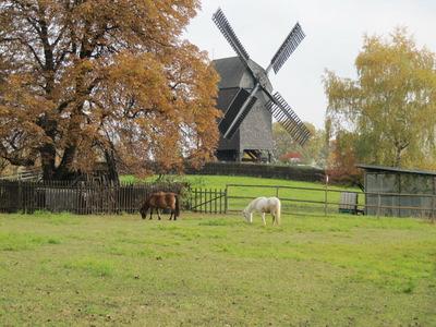 Bild Pferde vor Mühle